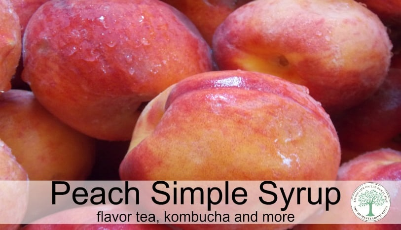 How to make delicious peach simple syrup for flavoring tea, kombucha and more! The Homesteading Hippy