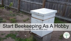 Pick Up Beekeeping As A Hobby & The Bees Will Thank You!