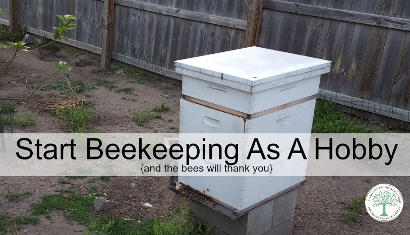 Pick up beekeeping as a hobby and the bees will thank you!  The Homesteading Hippy