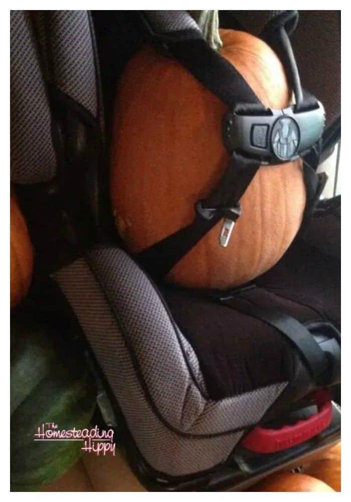 pumpkin in the car