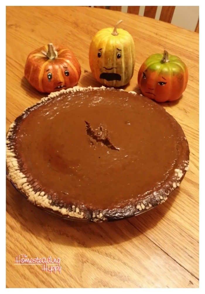 pumpkins around pumpkin pie