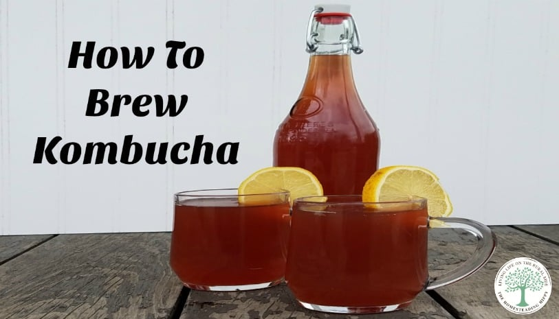 How to brew kombucha and different flavors you can try! The Homesteading Hippy