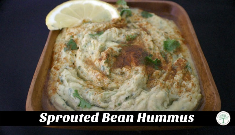 Love hummus like I do? Make it even healthier by sprouting the beans first! The Homesteading Hipp