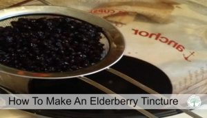 elderberry tincture post