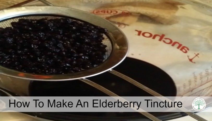 Get all natural cold and symptom relief with this elderberry tincture!  The Homesteading Hippy