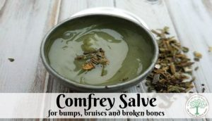 comfrey salve post