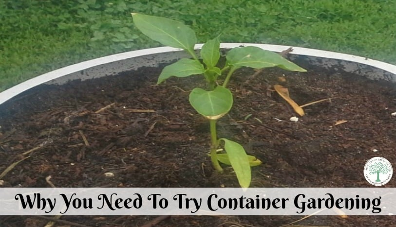 Even if you only have small space yu can still garden. Try planting a garden in containers. Container garden for the win! The Homesteading Hippy