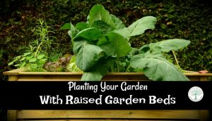 Raised Garden Beds-Are They Really Worth Building?