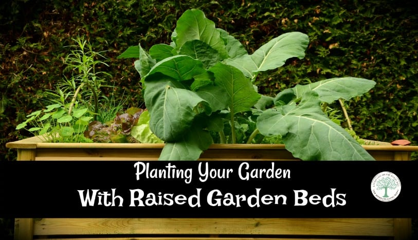 Is digging down into the soil of your backyard really worth it? What about all that time stooping, bending, and walking through dirt rows to reach your vegetables? What if there was a better way?