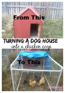 convert a dog house into a chicken coop