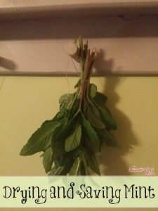 drying and saving mint