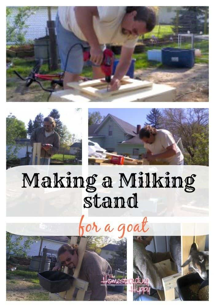 making a goat milking stand