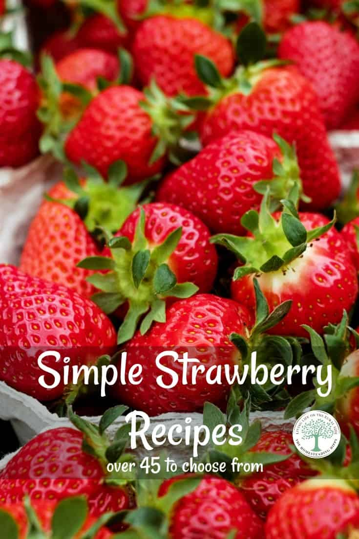 Here are over 45 delicious ways to enjoy these sweet berries in this Ultimate Simple Strawberry Recipes Collection! The Homesteading Hippy