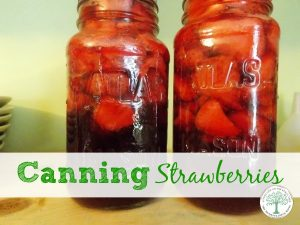 Canning Strawberries to store for winter without using freezer space. Learning how to can strawberries is a fun way to save them to use all year long!