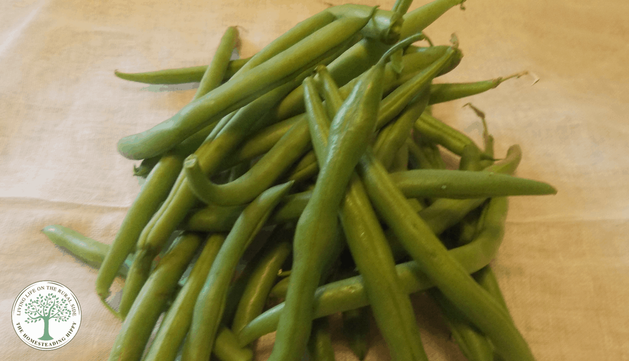 green beans for pressure canning