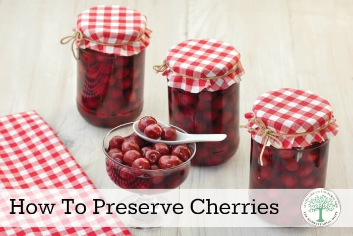 4 delicious ways to preserve cherries for all year long enjoyment! The Homesteading Hippy #homesteadhippy
