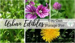 5 Urban Edibles with Amazing Health Benefits