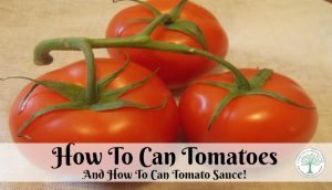 When planting tomatoes, saving them is important. I like to can tomatoes and can tomato sauce for all year long enjoyment.The Homesteading Hippy