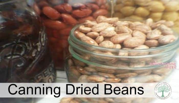 canning beans post