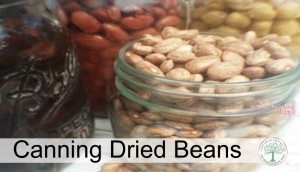 How to Can Dried Beans- Stock Your Own Pantry