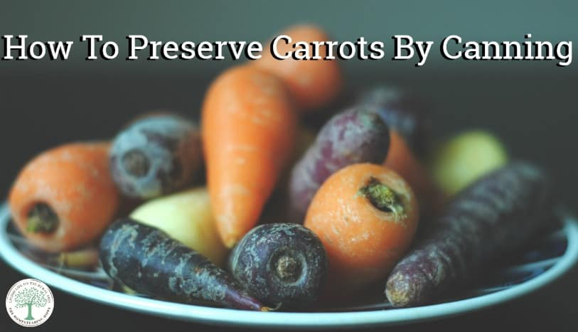 Canning carrots is a great way to preserve carrots you grow at home! The Homesteading Hippy