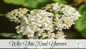 Why You Need Yarrow