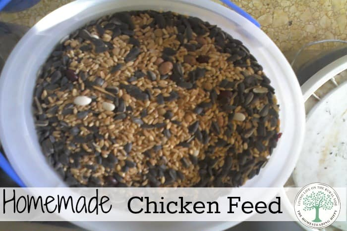 Happy chickens=great eggs! Here's a recipe to make your own homemade chicken feed for smaller flocks, or supplemental scratch for larger flocks. The Homesteading Hippy