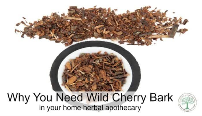 wild cherry bark post