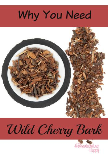 Wild Cherry Bark is a great herb to have in your home apothecary. Learn more about this herb and why you need it! The Homesteading Hippy #homesteadhippy #fromthefarm #herbs #wildcherrybark #coughsyrup