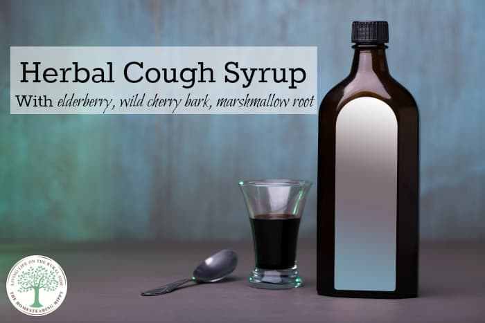 Got a nasty cough?  This herbal cough syrup will help deal with those symptoms naturally! The Homesteading Hippy #homesteadhippy #fromthefarm #herbs