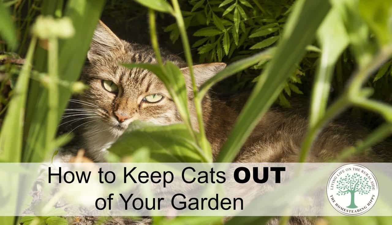 how to keep cats out of your garden the homesteading hippy