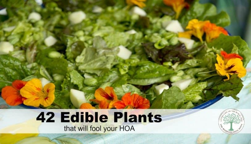 Learn how to grow beautiful edible landscape with plants pretty enough to fool any HOA. The Homesteading Hippy