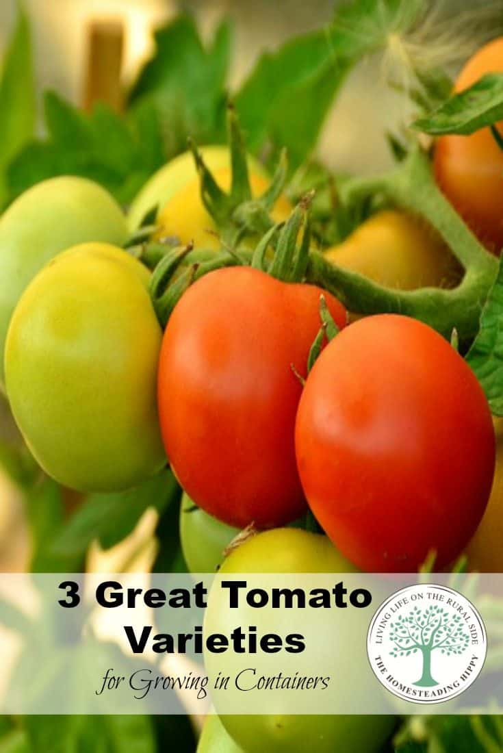 No space for a large garden? NO problem! Grow in containers! Here are 3 great varieties to try for tomato container gardening. The Homesteading Hippy