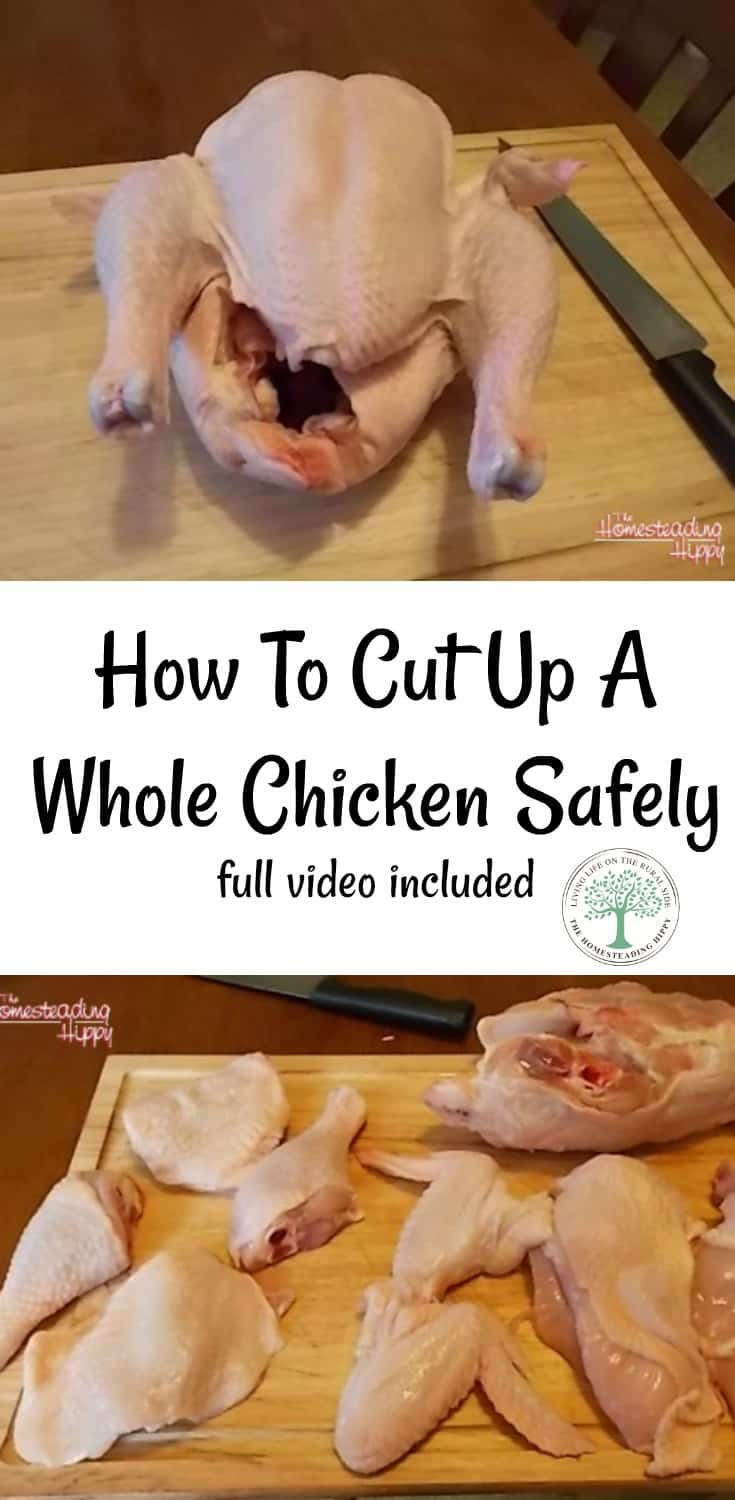 Learning how to cut up a whole chicken safely is easy. Watch the video and follow along, too! The Homesteading Hippy