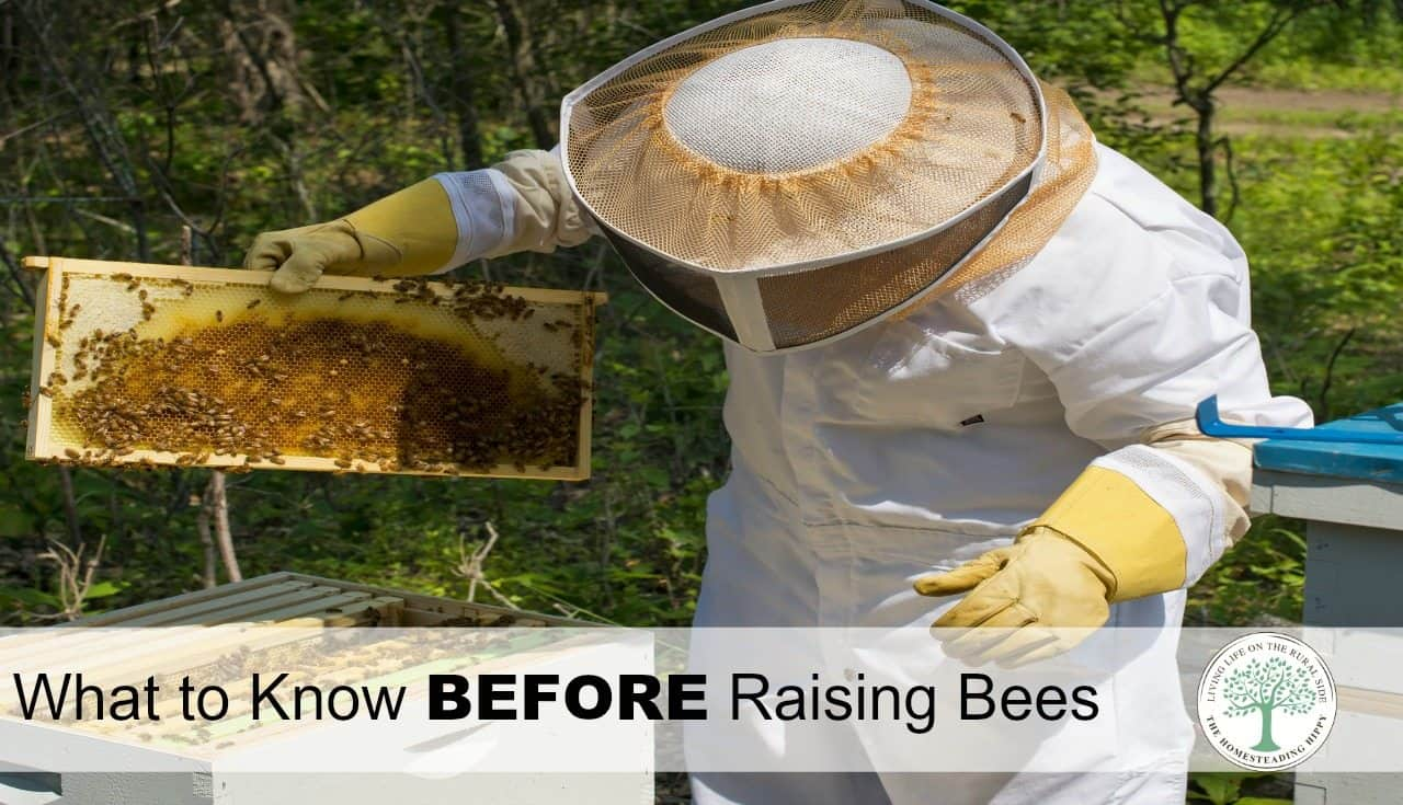 Beekeeping 101- What To Know Before You Start Raising Bees ...