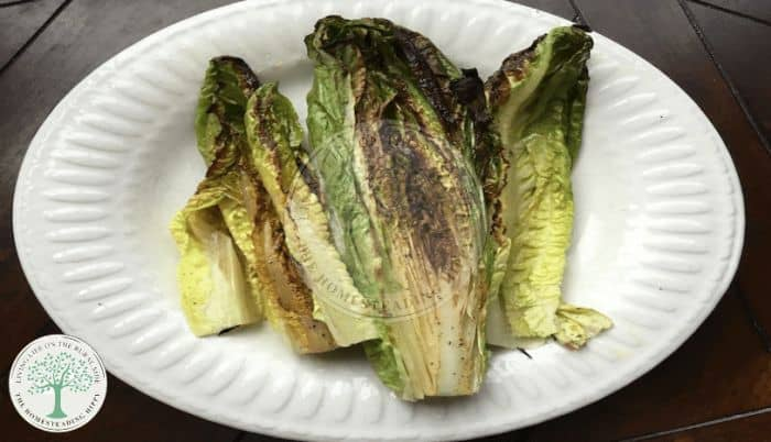 Grilled Romaine after