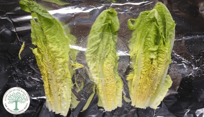 Grilled Romaine before