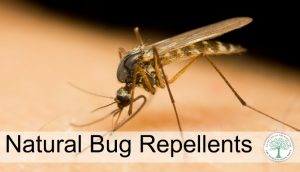 Homemade, All Natural Mosquito Repellent