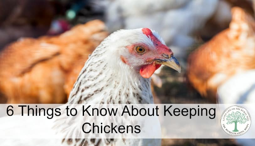 Thinking of keeping chickens? Here are 6 things you should know before you start your flock! The HomesteadingHippy