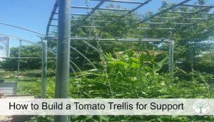 tomato trellis post