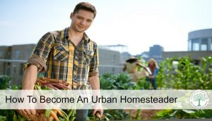How To Become An Urban Homesteader