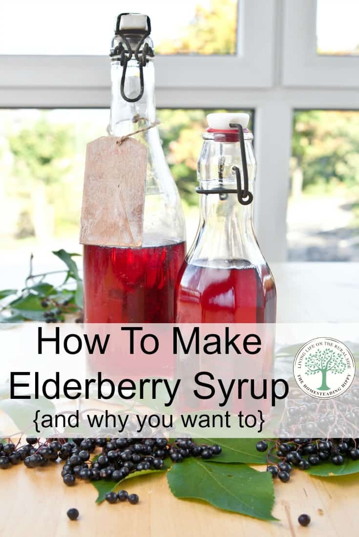 Learn how to make a delicious elderberry syrup from dried or raw berries, and several ways to use it! The Homesteading Hippy