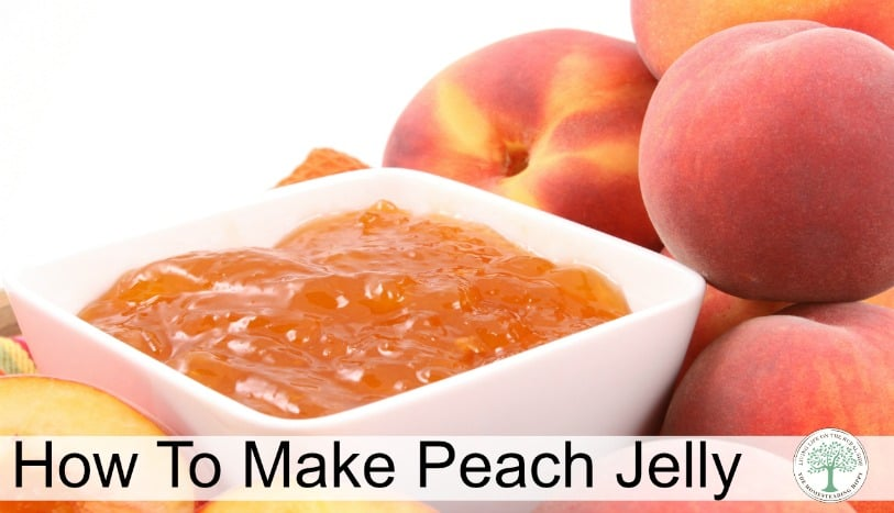 When peaches are in season, make this peach jelly! You'll be surprised at how easy it is, and frugal, too, since you use the scraps! The Homesteading Hippy