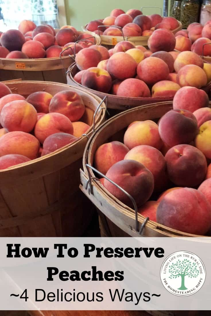 Got peaches? Here are 4 delicious ways how to preserve peaches~! The Homesteading Hippy