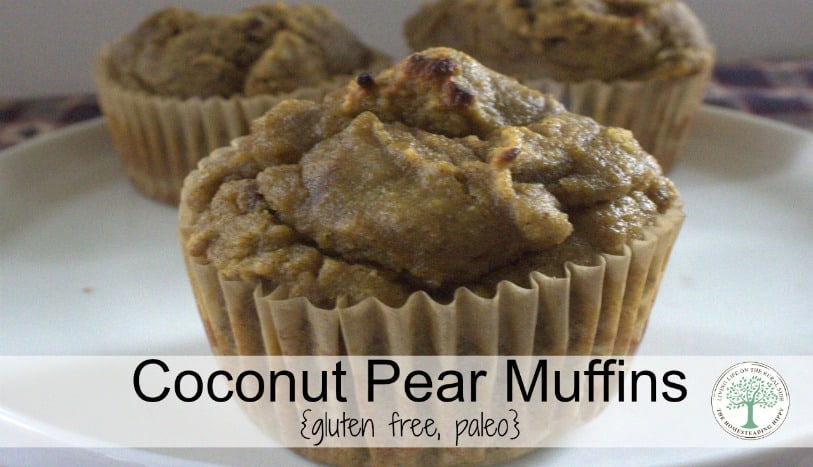 Pears are in season in the fall, and adding them to a coconut flour makes a taste bud teasing muffin that is full of healthy fats and fiber.  Coconut pear muffins for the win, people! The Homesteading Hippy