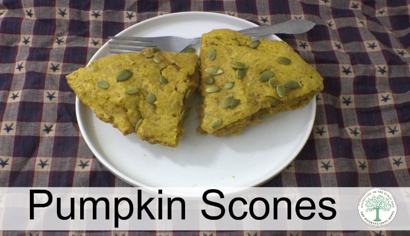 All the flavors of fall in one delicious treat!  Try these pumpkin scones today! The Homesteading Hippy