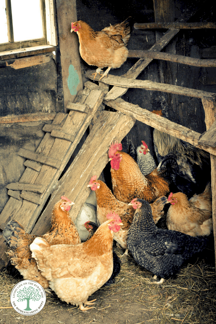 What chicken coop bedding is the best? We will find out as we look at 4 different chicken coop bedding methods anyone can use!