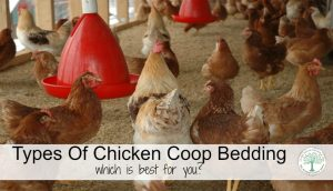 Choosing Chicken Coop Bedding
