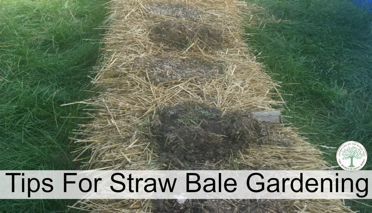 Straw Bale Gardening Instructions For A Great Weed Free