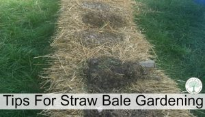 Straw Bale Gardening Instructions For A Great Weed Free Garden
